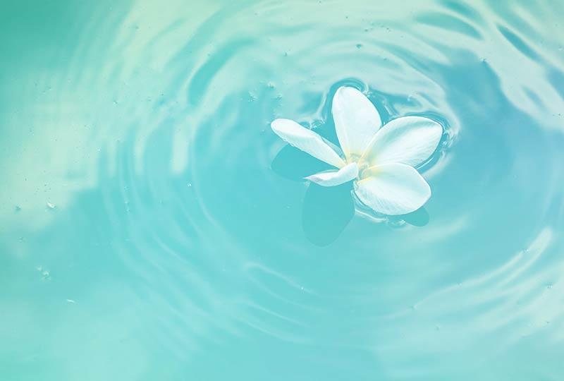 Spirituelle Lebensberatung: Weiße Blüte schwimmt auf dem Wasser